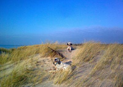 Accueil de chien plage Medoc