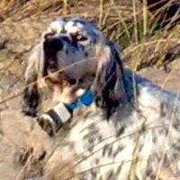 Pension canine Gironde elevage chien de chasse et dressage chien toutes races