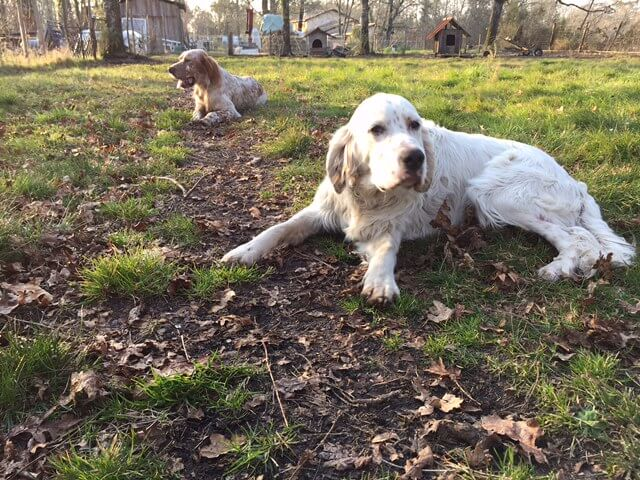 Éleveur canin en Gironde, Participer à une chasse privée en gironde