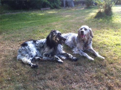 Pension canine en Gironde, Pension canine à Le Porge, Chenil dans la nature en Gironde