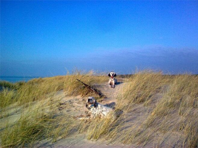 Éleveur canin en Gironde, Parc à chasse, chasse privée en gironde