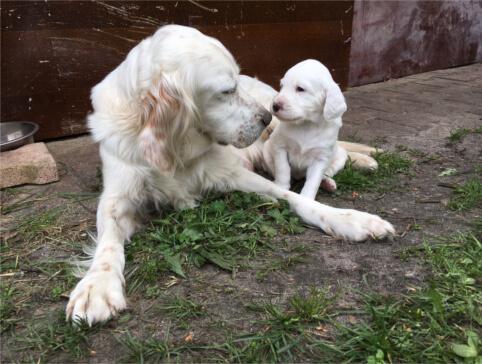 Éleveur canin en Gironde, Élevage canin en Gironde, Elevage chien de chasse gironde