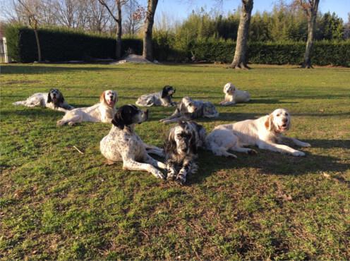 Dressage chien de chasse en Gironde, Dresseur chien en gironde,