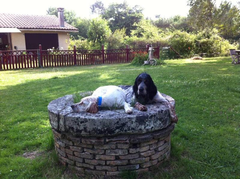 Dressage chien de chasse medoc